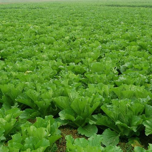 昆山农副产品配送成为热门,它在逐渐改变生活
